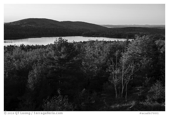 Trees and Eagle Lake, sunset. Acadia National Park (black and white)