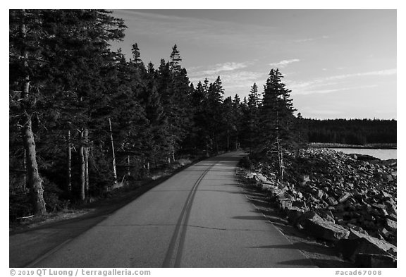 Road, Schoodic Peninsula. Acadia National Park (black and white)