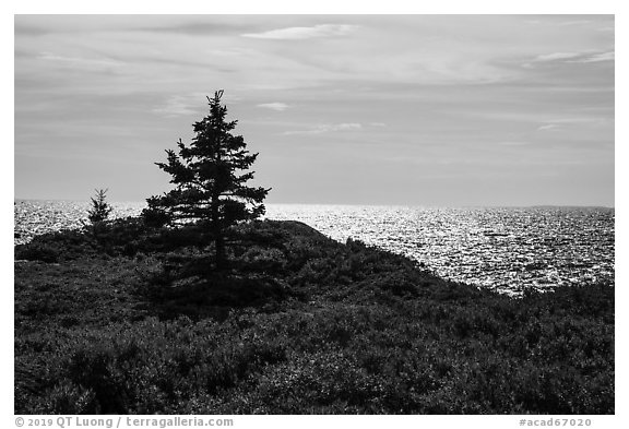 Autumn colors and shimmering sea, Little Moose Island. Acadia National Park (black and white)