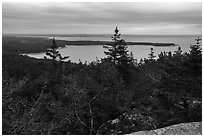 View from Schoodic Head. Acadia National Park ( black and white)