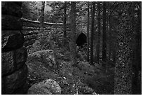 Forest and Hemlock Bridge. Acadia National Park ( black and white)