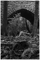 Ferns and Hemlock Bridge. Acadia National Park ( black and white)
