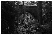 Hemlock Bridge over Maple Spring Brook. Acadia National Park ( black and white)