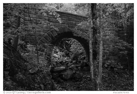 Waterfall Bridge framing Hadlock Falls. Acadia National Park (black and white)