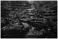 Duck Brook in autumn. Acadia National Park ( black and white)
