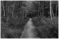 Boardwalk, Jesup Path. Acadia National Park ( black and white)