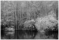 Cypress trees and autumn colors, Weston Lake. Congaree National Park, South Carolina, USA. (black and white)
