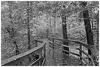 Boardwalk, forest in autumn colors. Congaree National Park, South Carolina, USA. (black and white)