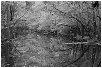 Cedar Creek reflections. Congaree National Park ( black and white)