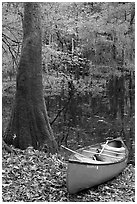 Red canoe on banks of Cedar Creek. Congaree National Park ( black and white)