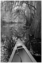 Canoe prow and swamp trees growing at the base of Cedar Creek. Congaree National Park ( black and white)