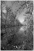 Wise Lake on a sunny day. Congaree National Park ( black and white)