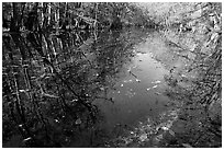 Fallen leaves and reflections in Wise Lake. Congaree National Park ( black and white)