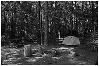 Longleaf Campground. Congaree National Park ( black and white)