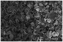 Close-up of forest floor. Congaree National Park ( black and white)