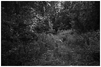 Bates Ferry Trail. Congaree National Park ( black and white)