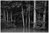 Forest near Bates Bridge flooded by Congaree River. Congaree National Park ( black and white)