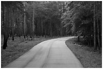 National Park Road. Congaree National Park ( black and white)