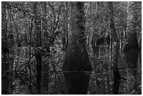 Flooded bottomland hardwood forest. Congaree National Park ( black and white)