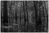 Flooded forest in summer. Congaree National Park ( black and white)