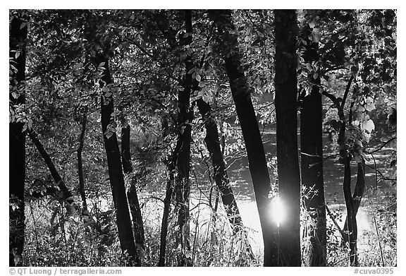 Sun reflected on a pond through trees, Virginia Kendall Park. Cuyahoga Valley National Park (black and white)