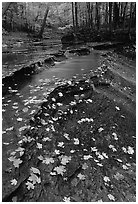 Fallen leaves and cascades near Bridalveil falls. Cuyahoga Valley National Park, Ohio, USA. (black and white)