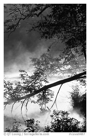 Fallen tree and mist, Kendall Lake. Cuyahoga Valley National Park (black and white)