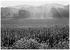 Field with sun and trees throught morning mist. Cuyahoga Valley National Park ( black and white)