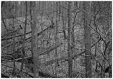 Barren trees and fallen leaves on hillside. Cuyahoga Valley National Park ( black and white)