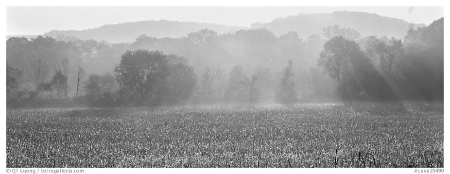 Sunrays in distant mist above field. Cuyahoga Valley National Park (black and white)