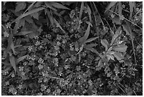 Close-up of plants and wildflowers. Cuyahoga Valley National Park ( black and white)