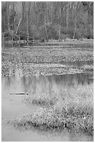 Beaver Marsh and reflections. Cuyahoga Valley National Park ( black and white)