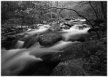 Arching dogwood in bloom over the Middle Prong of the Little River, Tennessee. Great Smoky Mountains National Park, USA. (black and white)