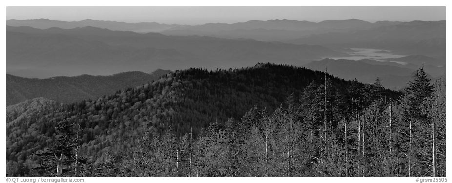Trees and distant mountaintop ridges at sunrise. Great Smoky Mountains National Park (black and white)