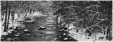 Stream in wintry forest. Great Smoky Mountains National Park (Panoramic black and white)