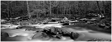 Stream flowing over boulders and spring forest. Great Smoky Mountains National Park (Panoramic black and white)