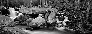 Cascading stream and boulders. Great Smoky Mountains National Park (Panoramic black and white)