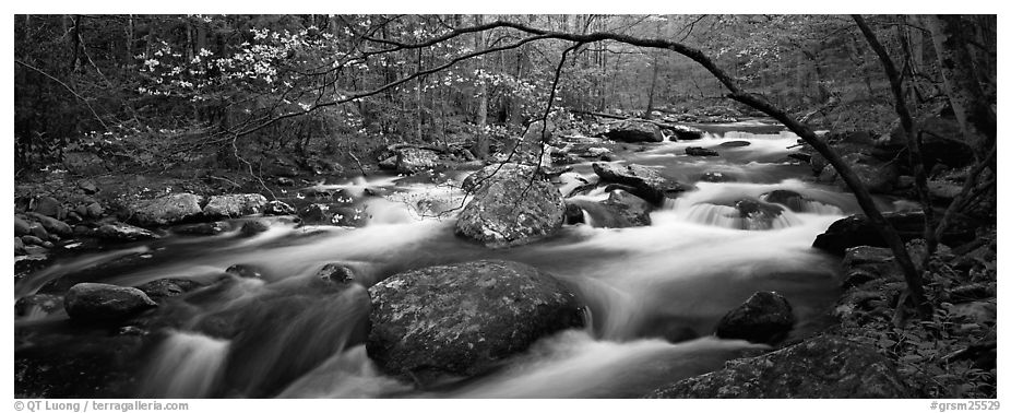 Cascading stream in Appalachian spring forest. Great Smoky Mountains National Park (black and white)