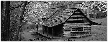 Pioneer cabin in the spring. Great Smoky Mountains National Park (Panoramic black and white)