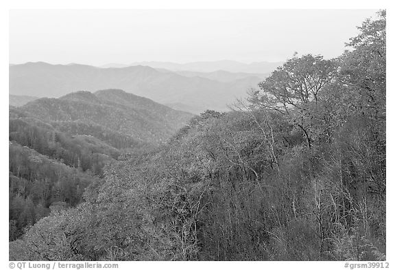 Ridge and mountains covered with trees in autuman foliage, dawn, North Carolina. Great Smoky Mountains National Park (black and white)