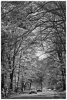 Cars on main park road with fall foliage, North Carolina. Great Smoky Mountains National Park, USA. (black and white)