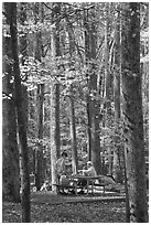 Family at picnic table in autumn forest, Tennessee. Great Smoky Mountains National Park, USA. (black and white)