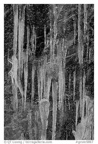 Icicles on rock face, Tennessee. Great Smoky Mountains National Park (black and white)