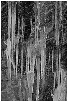 Icicles on rock face, Tennessee. Great Smoky Mountains National Park, USA. (black and white)