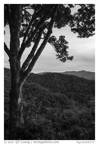 View from Cataloochee Overlook, North Carolina. Great Smoky Mountains National Park (black and white)