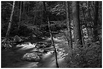 Little River, Elkmont, Tennessee. Great Smoky Mountains National Park ( black and white)
