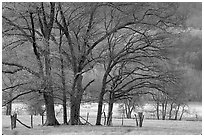 Trees in fenced meadow, early spring, Cades Cove, Tennessee. Great Smoky Mountains National Park, USA. (black and white)