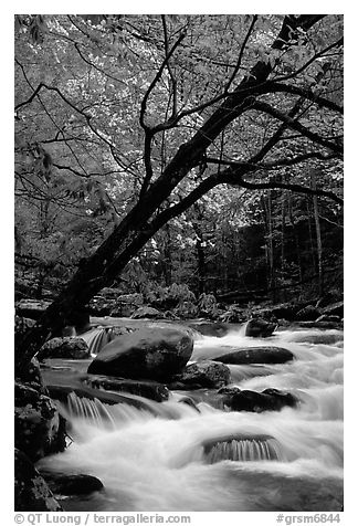 Dogwoods trees in bloom overhanging river cascades, Middle Prong of the Little River, Tennessee. Great Smoky Mountains National Park, USA.