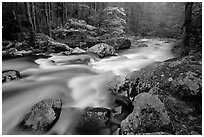 Middle Prong of the Little River flowing past dogwoods, Tennessee. Great Smoky Mountains National Park, USA. (black and white)