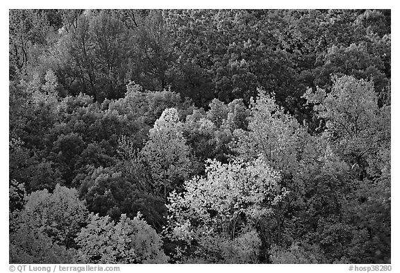 Trees in fall color on hillside. Hot Springs National Park (black and white)
